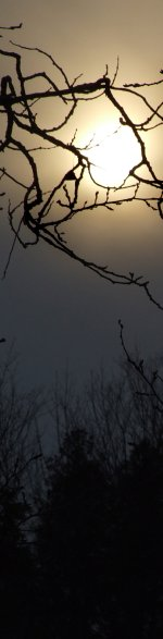 moon and trees sidebar