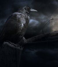 raven and moon_ canstockphoto10827044